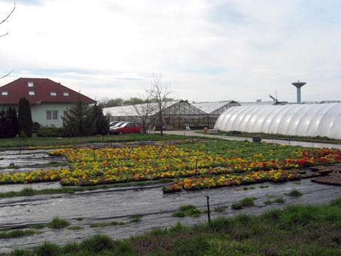Kapuvári Kertészeti Kft.